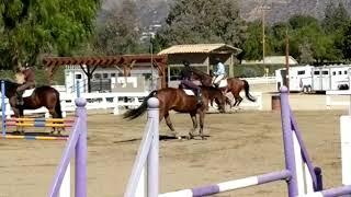 Rae. 2019 Irish Sport Horse gelding for sale. 17.1h.