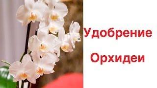 Орхидеи.Удобрение.Как удобрять орхидеи?способ подкормки орхидеи(Очень актуальным вопросом среди владельцев орхидей является Как удобрять орхидеи и какими удобрениями?..., 2014-01-12T10:44:48.000Z)
