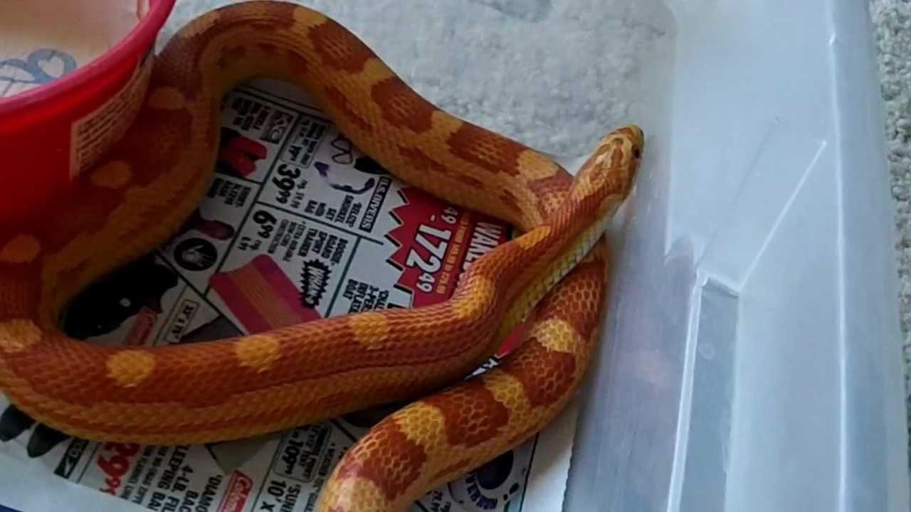how to close off a def python