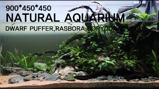 Natual Dwarf Aquarium 900*450*…