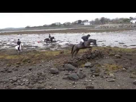 South Mayo Harriers Hunt in the Quay and Rosbeg area. 03.12.2016.