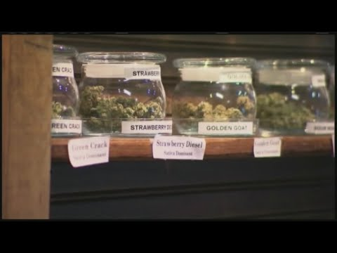 Where would the money from recreational marijuana sales tax go?