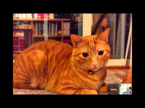 Random Cat Video of my Friend cuz its a Jumbi!