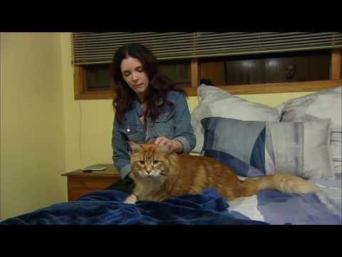 Australia longest Cat