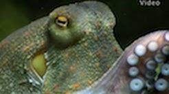 HD: Octopus - die Krake im Zoo Leipzig