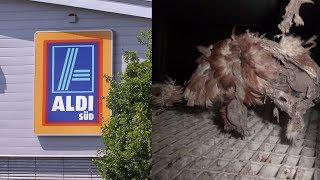 Verstörende Bilder zeigen, woher die Bio-Eier von Aldi kommen!