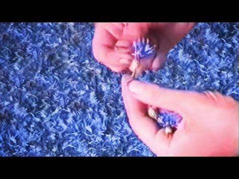 Василек луговой (синий). Лекарственные и полезные