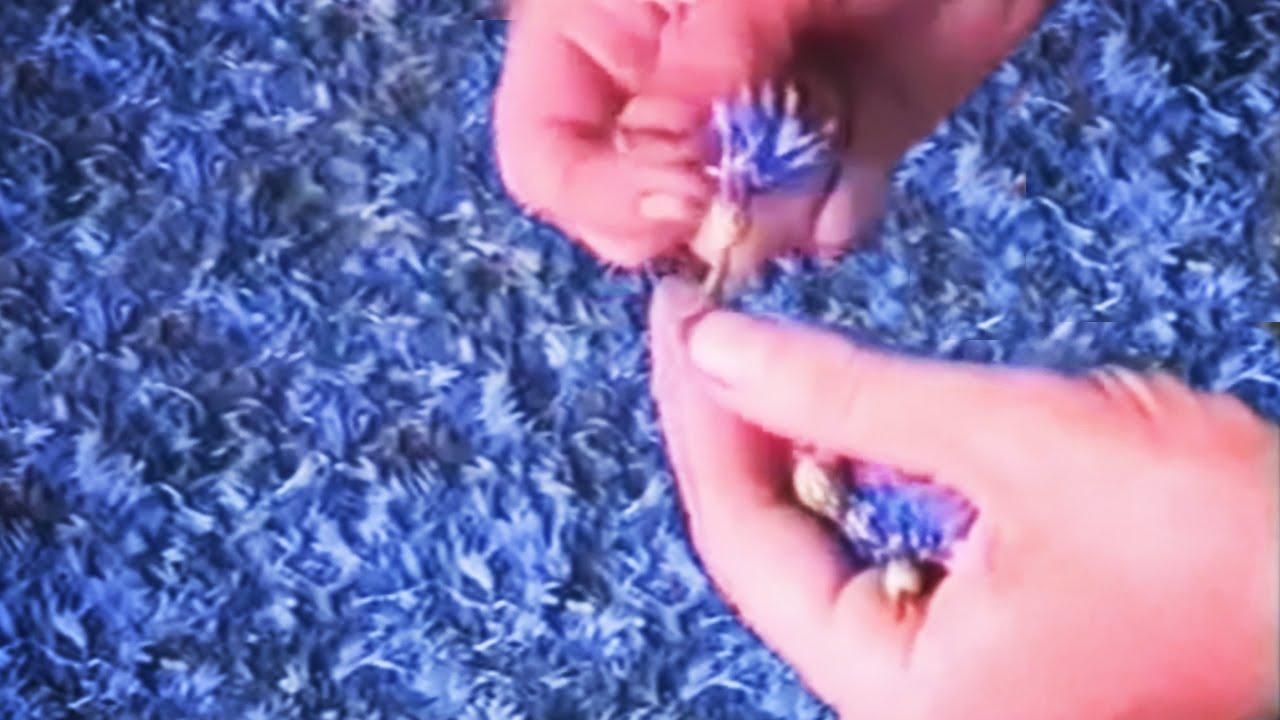 Синий василёк))) - YouTube