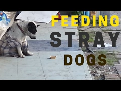 Feeding abandoned dogs on the streets of Thailand during our vacation.