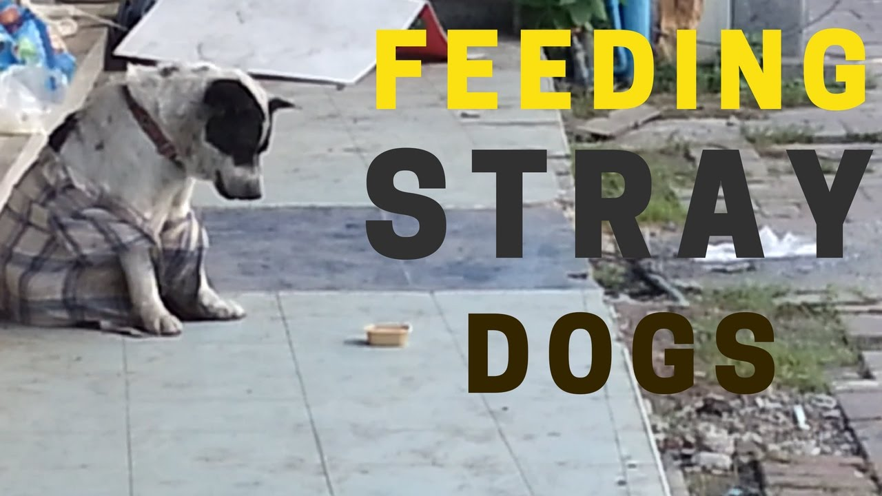 Tourists feeding stray dogs in Thailand.  Real life heroes / Faith in humanity restored