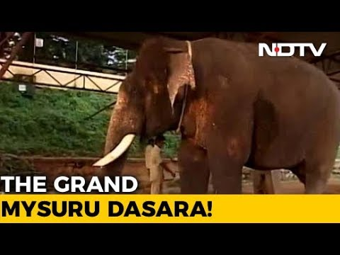 Meet Arjuna The Elephant, The Life Of Dasara Celebrations In Mysore