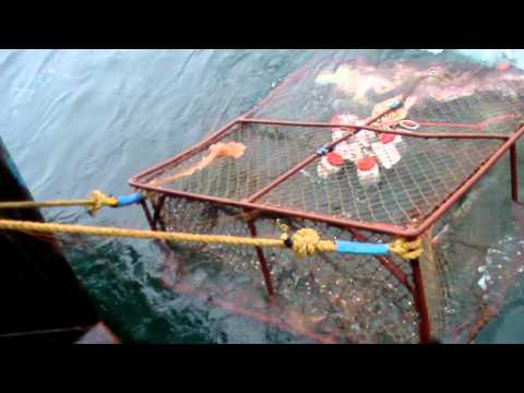 Crab Fishing Our Way