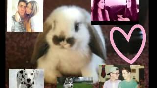 Stally Zalfie Troyler Dalmatian Bunny Husky