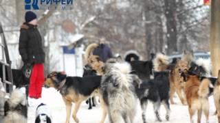 Внимание опасность!   Бродячие собаки