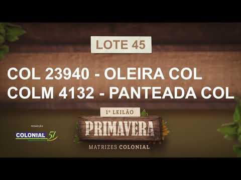 LOTE 45   COL 23940,COLM 4132