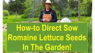 Vegan-Organic (Veganic) Gardening Tips: How-to Direct Seed Romaine Lettuce in Your Veganic Garden
