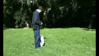 Hanrob Dog Training Sydney - Pet Dog Obedience Training For Walking Correctly.