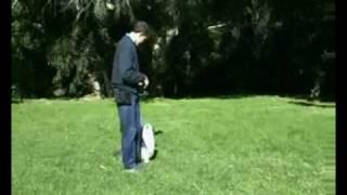 Hanrob Dog Training Sydney - Pet Dog Obedience Training For Walking Correctly.