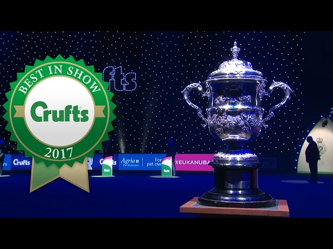 American Cocker Spaniel wins Best In Show at Crufts 2017
