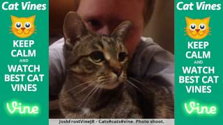 Funniest Cat Vines #125 - Updated September 19th, 2015 thumbnail
