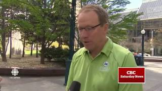 Skedaddle talking about Bear in Scarborough CBC News 5 13 17
