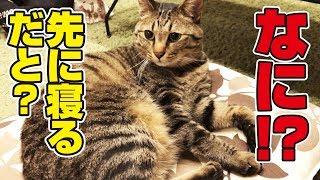 寝室に一人寂しく向かう父に見兼ねた猫さんたちが…!? thumbnail