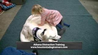 Distraction Training Compilation - Off Leash K9 Training Houston