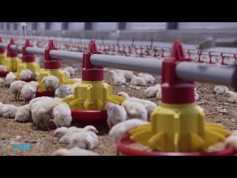 Codaf Poultry Equipment
