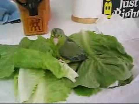 Cleo's Lettuce Bath - Part 2