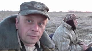 Охота на перелетную утку видео