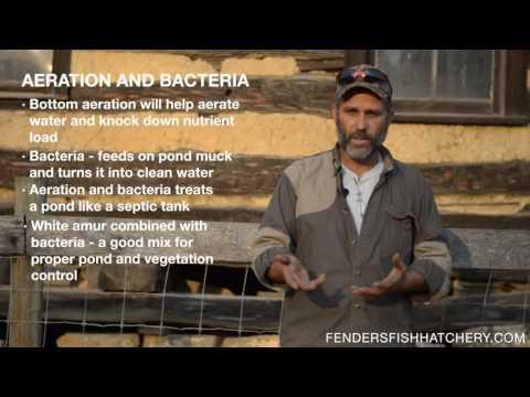 Vegetation Control - Major Pond Vegetation Problems And Three Common Fixes
