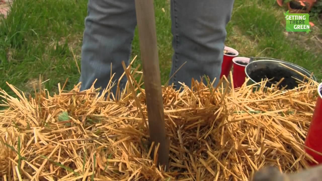 Planting Sweet Potato in Straw Bales - YouTube