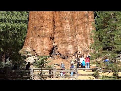 Топ 14 Самых Страшных Деревьев, о Которых Ты Не Знал!