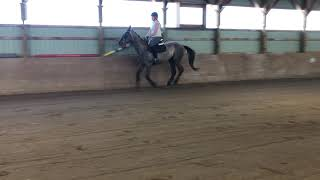 Cambria Under saddle