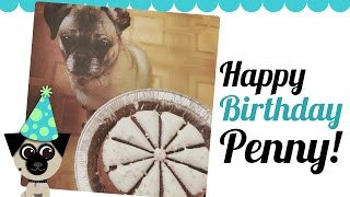 Happy 8th Birthday, Penny!!!! Pug Vlog