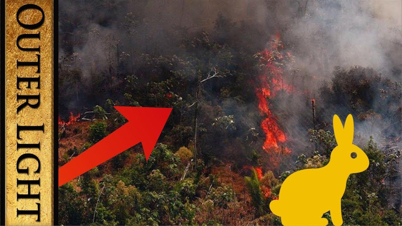 The Outer Light Daily Rabbit Hole #457   Suzie Dawson and 1vs5   Amazon burning