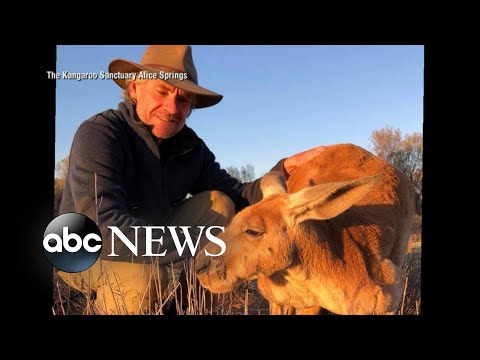 Billy and Julie - News You Need: RIP Roger the Kangaroo
