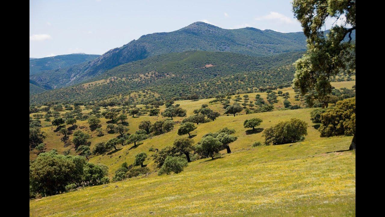 Los 11 árboles más bellos del mundo - ESdiario.