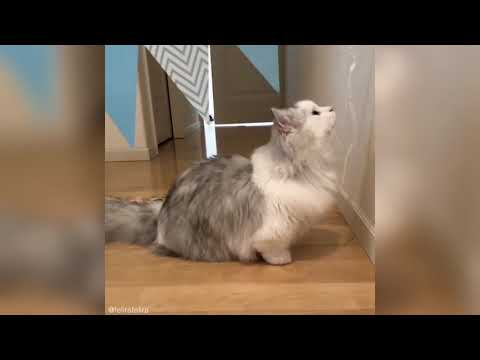 Awesome Animals Cute Funny Cats Vine Compilation 🔴 Kitties Kittens Cat