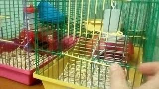Корюшка-Сахалинка и полный дом животных.