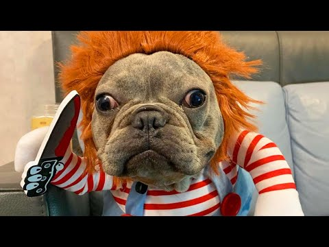 Mo' Bounce - Trudging Through Tuesday? Here's Some Pets in Halloween Costumes!