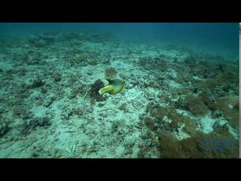 FIFISH VIDEO  Visit Indonesia's undersea world
