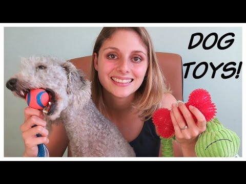 choosing dog toys - toys for terriers