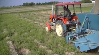 Kopanie ziemniaków 2016 Ursus