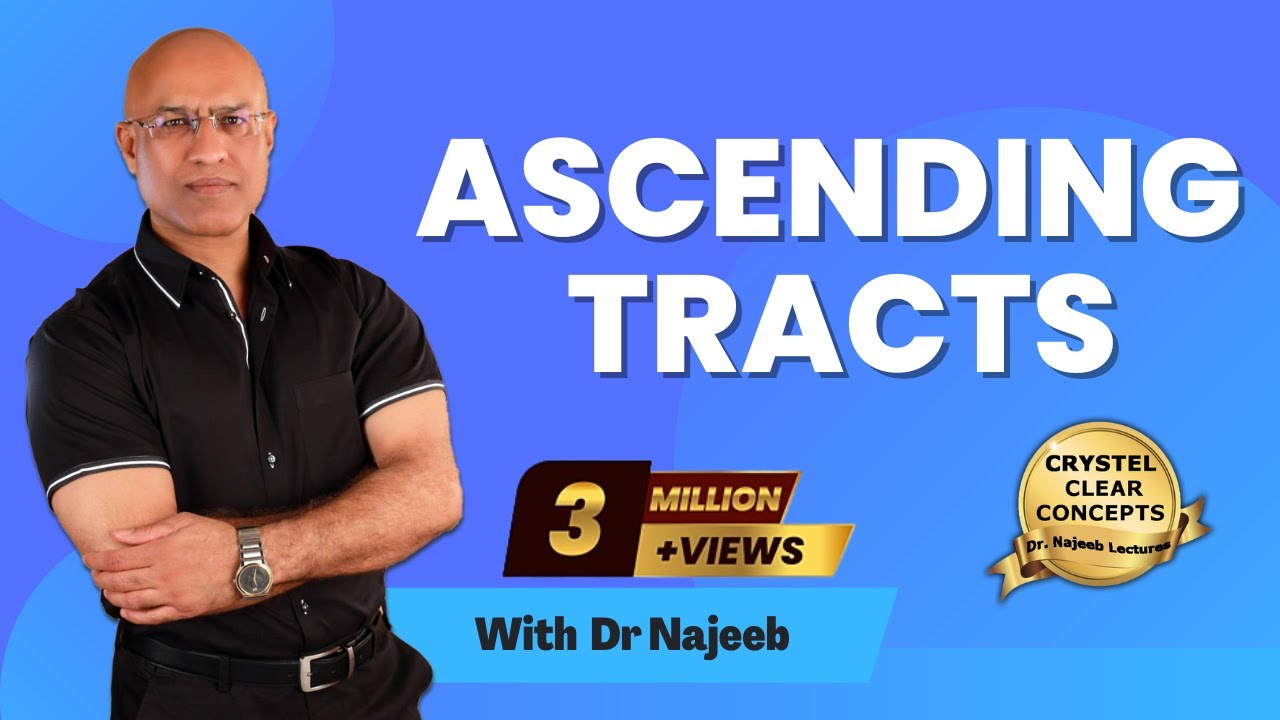 Spinothalamic Tract - Ascending Tracts - Dr  Najeeb Lectures