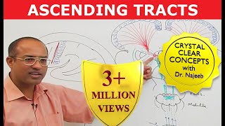 Spinothalamic Tract - Ascending Tracts - Neuroanatomy