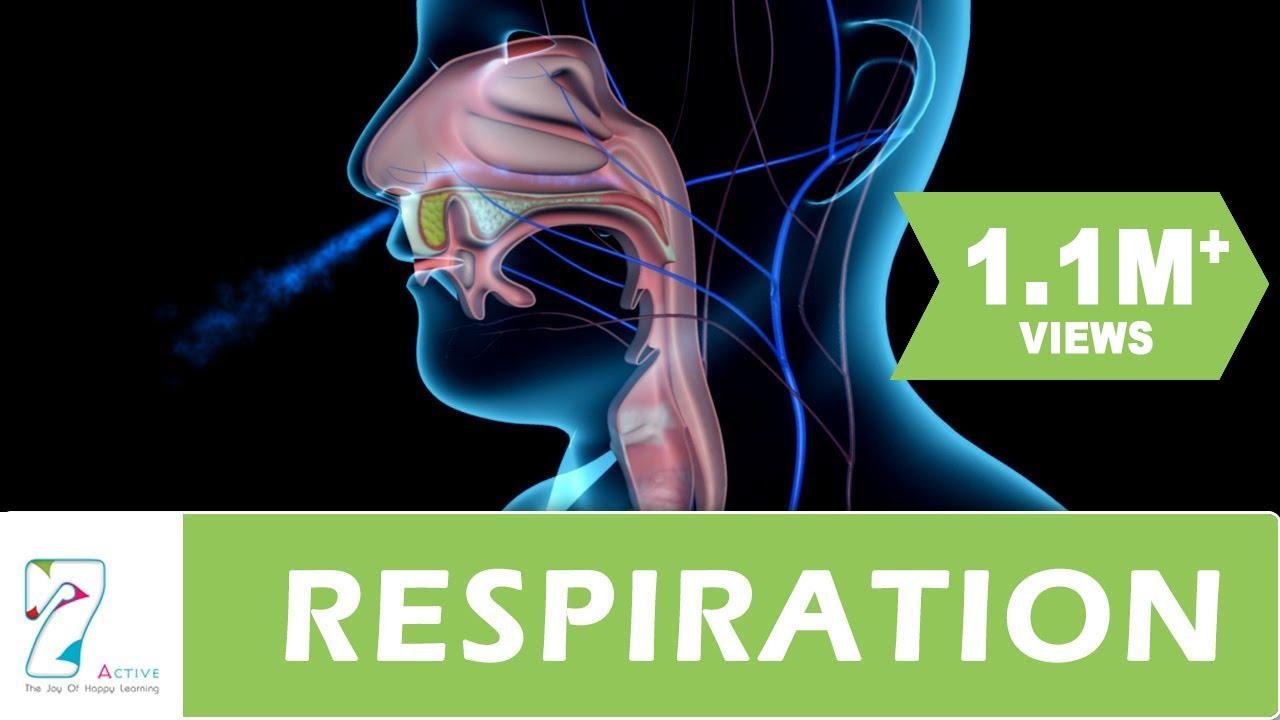 cellular respiration anabolic process
