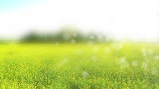 free springtime background loop