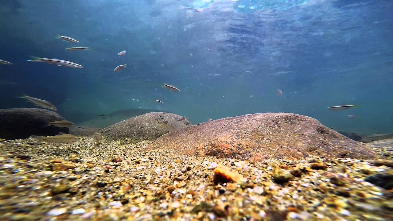 hd wallpaper fish in water