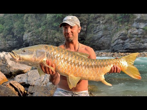 Fishing In Nepal River | Record Golden Mahseer (138cm) |  Big Fish Caught